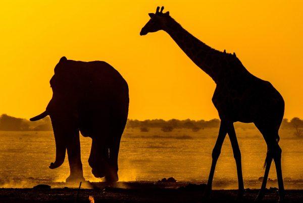 Afrika – Unterwegs im wilden Süden